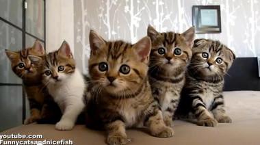 Synchronized_dancing_kitties