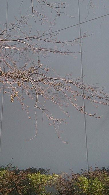 Sakura20140326