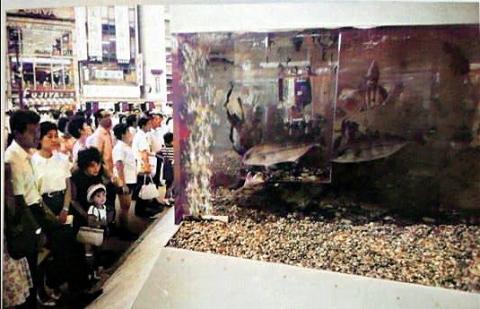 ソニー水族館(昭和41年1966年)カラー化